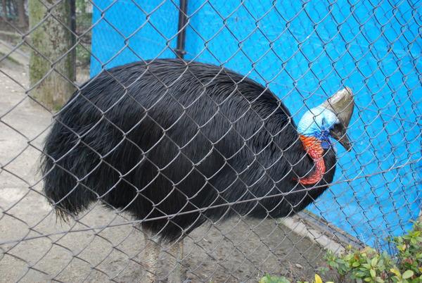 久留米鳥類センター (25)