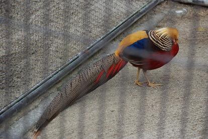 久留米鳥類センター (15)