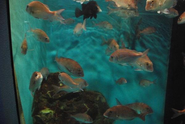 桂浜水族館 (42)