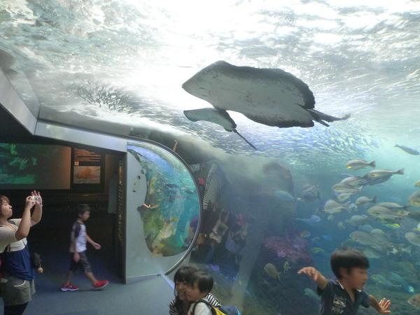 江ノ島水族館 (18)
