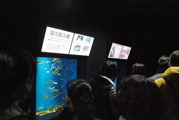 加茂水族館 (2)