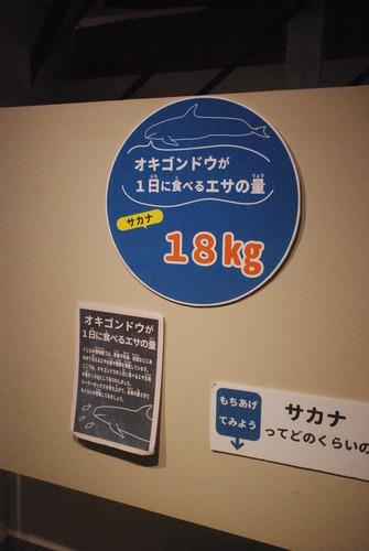 くじら博物館 (36)