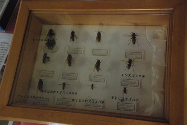 蜂天国 (11)