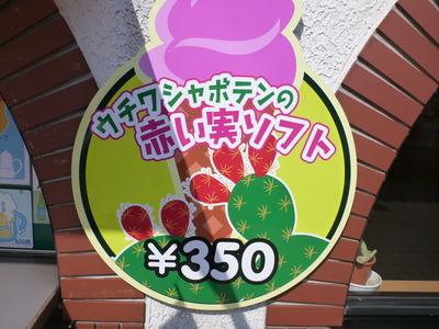 伊豆しゃぼてん公園 (42)