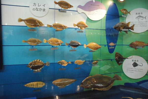 日本一の魚の剥製水族館 (15)