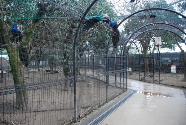 久留米鳥類センター (12)