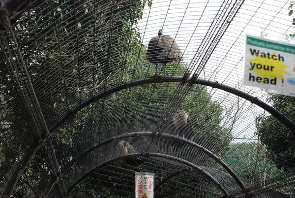 久留米鳥類センター (10)