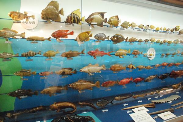 日本一の魚の剥製水族館 (16)