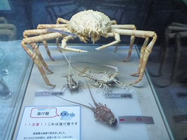 箱根園水族館 (23)