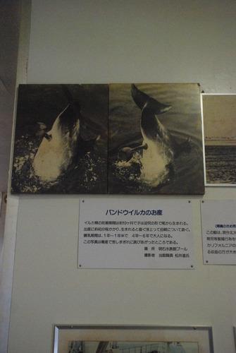 くじら博物館 (8)