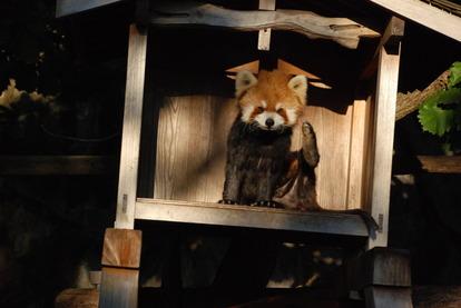 野毛山動物園 (4)
