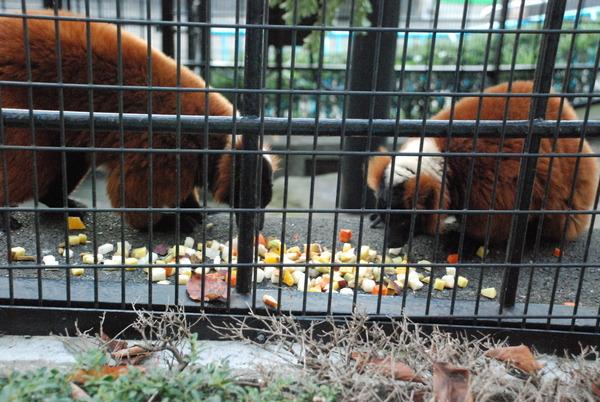 野毛山動物園 (20)