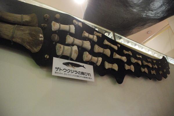 くじら博物館 (11)