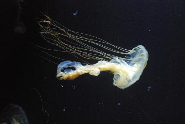 加茂水族館 (28)