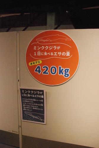 くじら博物館 (35)
