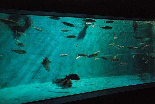 新屋島水族館 (28)