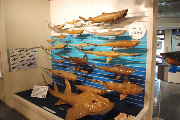 日本一の魚の剥製水族館 (5)