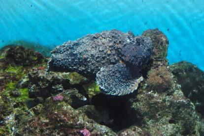 鹿児島水族館 (9)