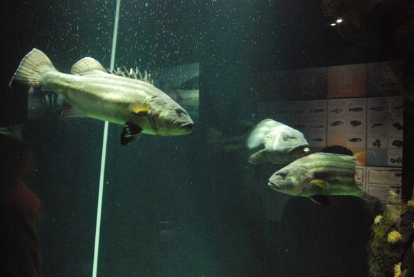 加茂水族館 (13)