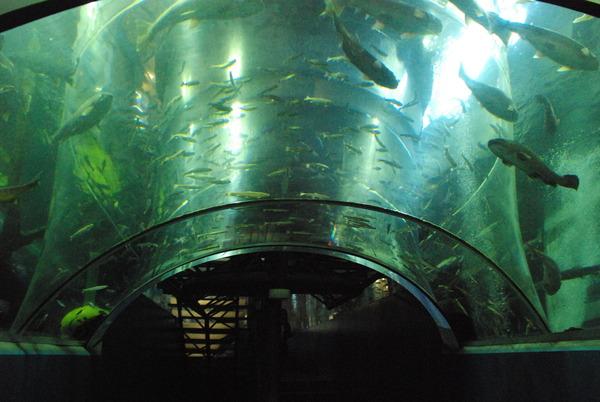 山梨県立富士湧水の里水族館 (27)