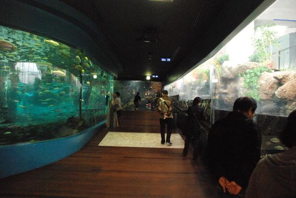 山梨県立富士湧水の里水族館 (19)