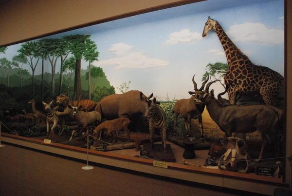 滋賀サファリ博物館 (12)
