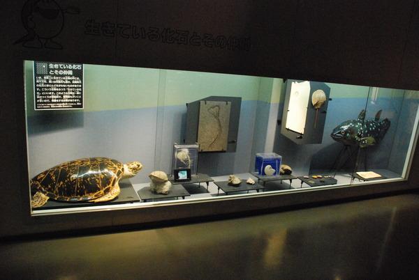 カブトガニ博物館 (24)