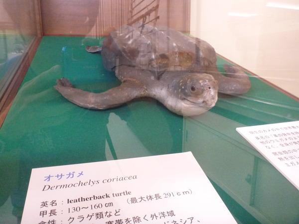 東京海洋大学 水産資料館 (58)
