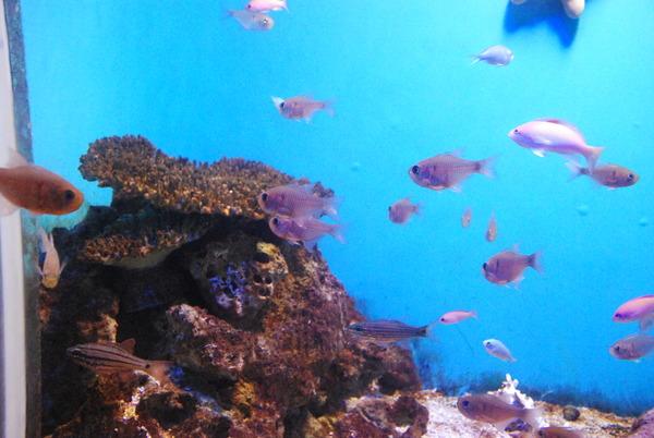 鹿児島水族館 (6)