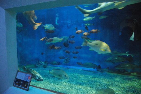 桂浜水族館 (44)