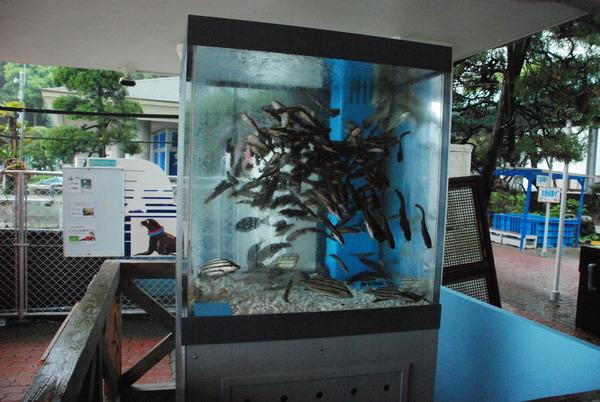 桂浜水族館 (2)