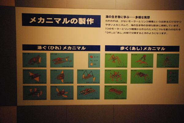 東海大海洋生物博物館 (28)