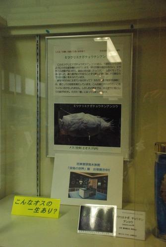戸田造船資料館 (20)