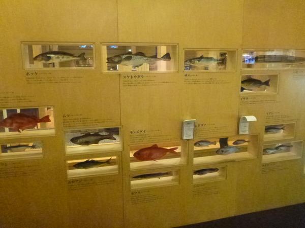 かまぼこ博物館 (18)