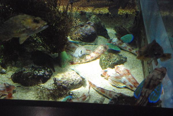 加茂水族館 (5)