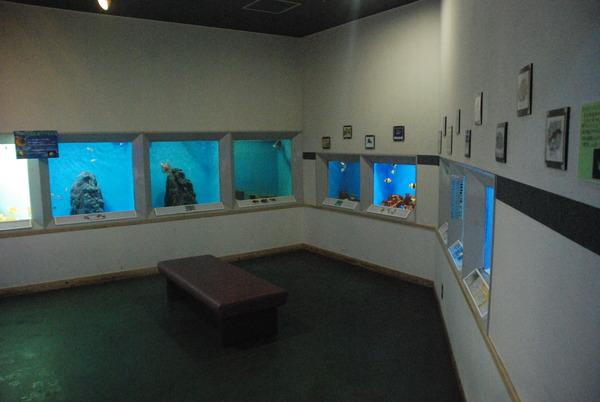 桂浜水族館 (39)