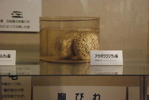 くじら博物館 (33)