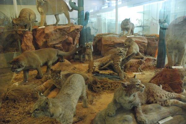 猫の博物館 (14)
