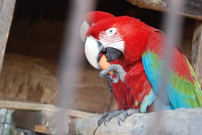 久留米鳥類センター (23)