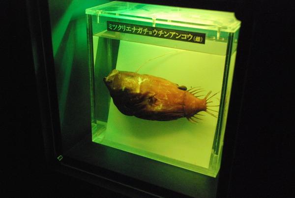 沼津港深海水族館 (39)