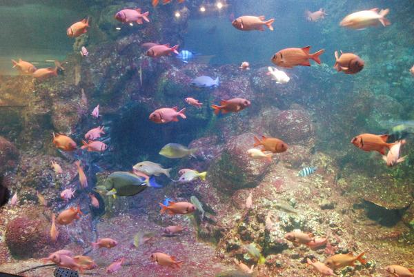 新屋島水族館 (15)
