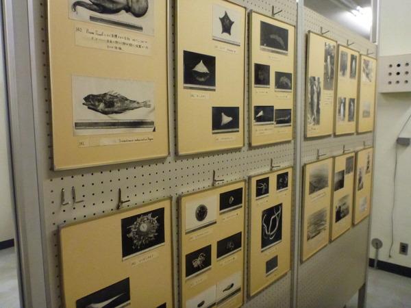 東京海洋大学 水産資料館 (47)