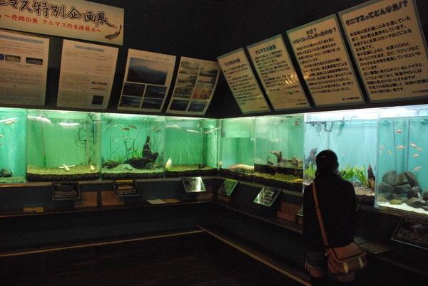 山梨県立富士湧水の里水族館 (18)
