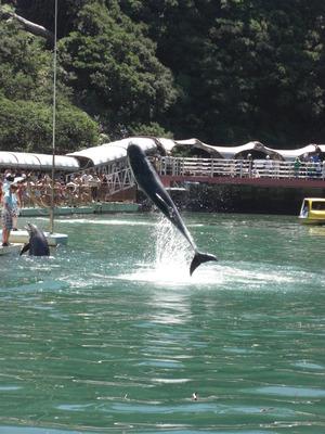 下田海中水族館 (3)