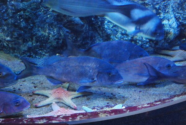 鹿児島水族館 (17)