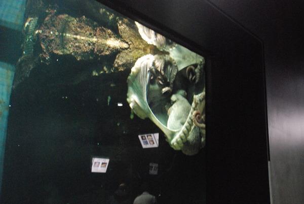 加茂水族館 (9)
