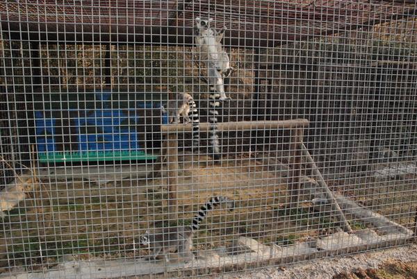 しろとり動物園 (9)
