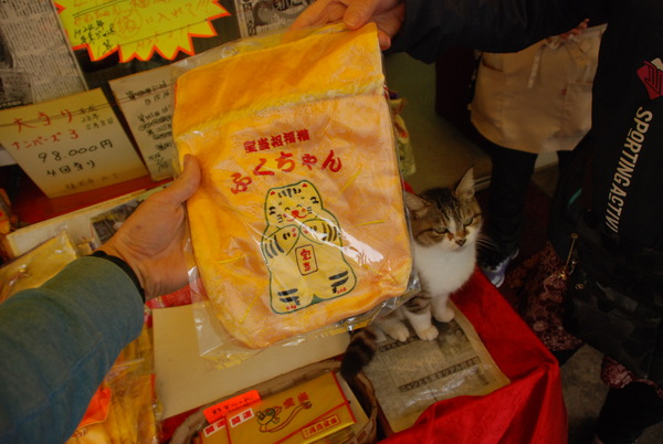 宝当神社 (13)