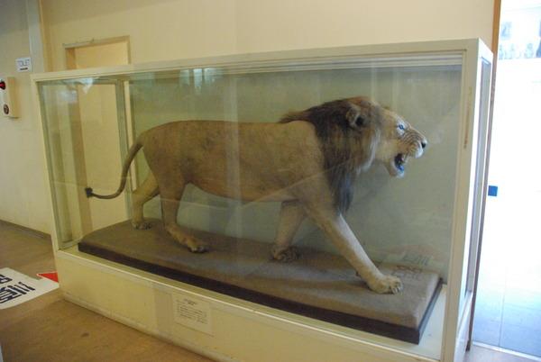 猫の博物館 (4)
