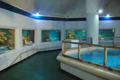 桂浜水族館 (15)